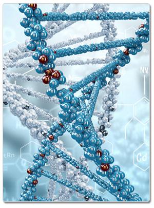 DNA領域