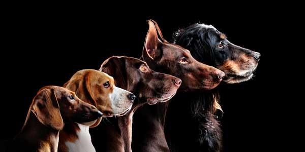 「血統書付きの犬」