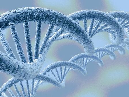DNA型鑑定の真実のイメージ図