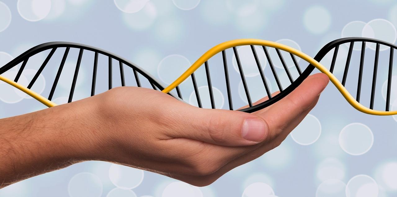 DNA型鑑定とは