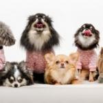 dog_poo_pets