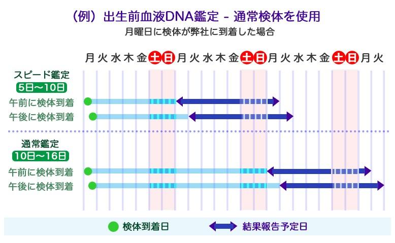 出生前血液dna鑑定のスケジュール例