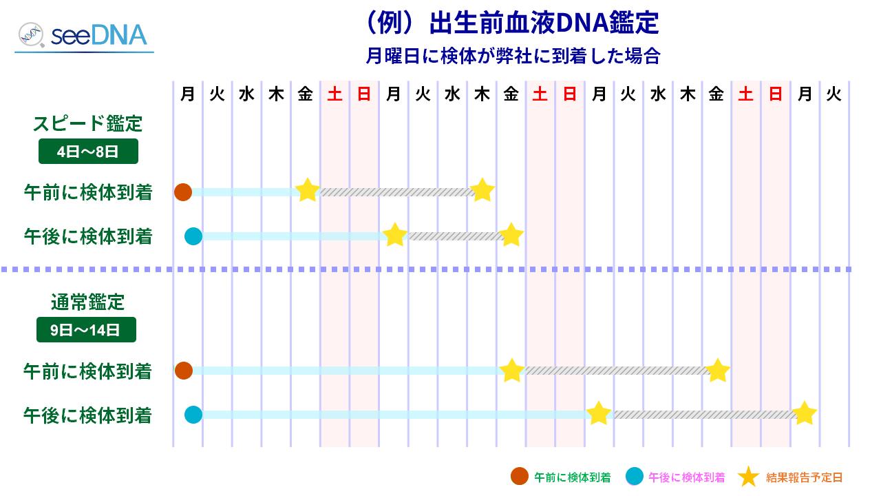 出生前血液dna型鑑定のスケジュール例