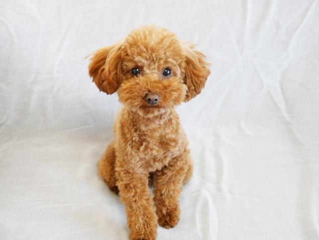 犬のDNA鑑定イメージ